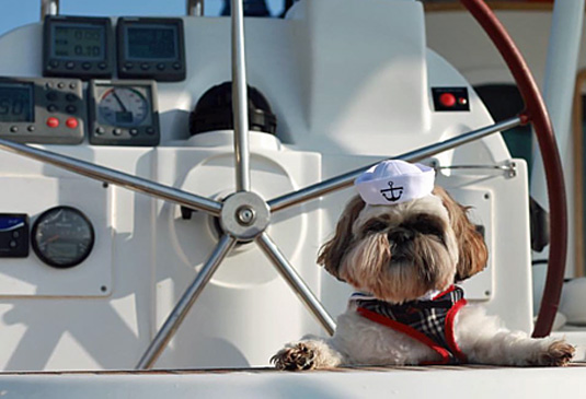 Taking the Dog on a Charter Boat Holiday