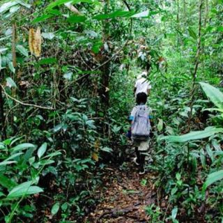 Jungle walk, Koh Chang