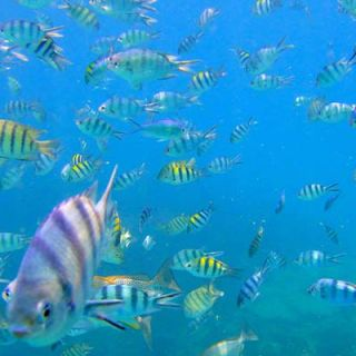 Koh Chang sea life