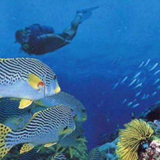 Seychelles marine life abounds